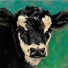 Brockle Face Calf Study in Oil