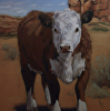 A Hereford in New Mexico-commission