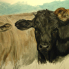 Three Graces (Charolais, Black and Jersey Cow Painting)