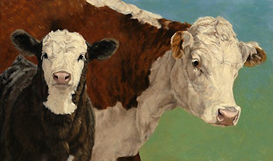 Cow and Calf on Blue/Green  (Hereford and Black Baldy) - Oil