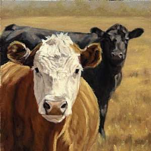 "Golden State Cows Study by denise rich Oil ~ 12"" x 12"""