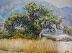 The Old Oak by Thomas Mann