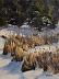 Winter Cattails by JONI JUREK