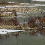 Cindy House - Cindy House: Preserving Nature's Splendor