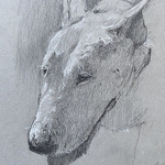 Drew Bandish - Drawing Animals Zoom Wed Mid Day 7020