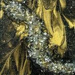 """FIRST GALLERY OLATHE  - 6""""X6"""" KISS PAINTING GEODE  SATURDAY JUNE 19  TIME: 2:00-4:00  COST: $30."""