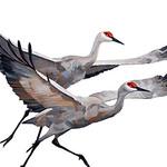 Judy Martindale - The Great Migration: A celebration of Sandhill Cranes in Nebraska
