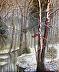 Winter Woods by Durinda Cheek