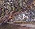 California Eucalyptus by Michelle Jung