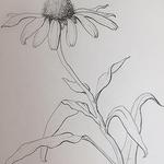 Patricia Savage - Intermediate Drawing