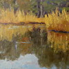 Wetland Reflections