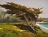 Cypress Over Carmel Beach by Brian Blood Oil ~ 11 x 14