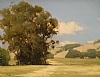 Eucalyptus, Brent's Ranch by Brian Blood Oil ~ 11 x 14