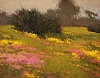 Spring Mustard and Iceplant by Brian Blood -