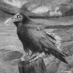 Joseph Bellofatto - Animalia