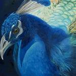 Debra Trent - Birds In Art