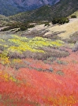 October Pinks by Lee McVey Pastel ~ 16 x 12