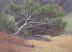 Windward by Michelle Murphy-Ferguson Oil ~ 6 x 8