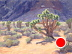 Bonnie Springs Joshua Tree by Michelle Murphy-Ferguson Oil ~ 9 x 12