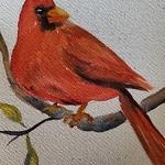 Anne Urso - Cardinal