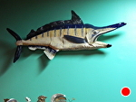 Marlin at Andales Mexican Resturant in Los Gatos Calif by Amy Brown Clay ~ 2.0 feet x 4.5 feet