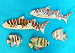 Leopard Shark 13x7 and batfish 8x6 by Amy Brown Clay ~ 7 x 13