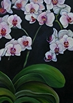 "My White Orchids by Amy Brown Oil ~ 18"" x 24"""