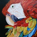"Parrot Head by Amy Brown Oil ~ 18"" x 18"""