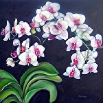 "My White Orchid by Amy Brown Oil ~ 24"" x 24"""