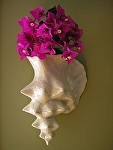 "Conch Shell Vase by Amy Brown Clay ~ 9"" x 11"""