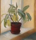 Plant Study by Marion Rose  ~ 14 x 12
