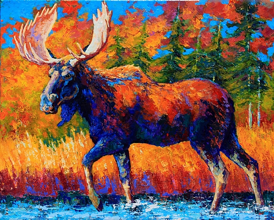Close Encounter - Bull Moose - Acrylic