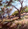 Olive Grove in Greece