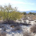 Kristen Olson Stone - Landscape Painting, The California Desert Session 2