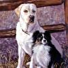 Knut & Izzy