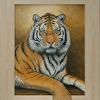 Tiger Oh Tiger!