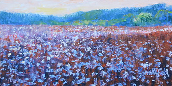 Afternoon-glow-on-a-cotton- - Oil