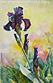 Purple Iris -- Licensed Art Print at Framed Canvas Art by Steve Henderson  ~  x