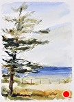 """Glen Haven Pine"" by Neil Walling Watercolor ~ 10"" x 7"""