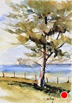 """Cannery Pine"" by Neil Walling Watercolor ~ 10"" x 7"""