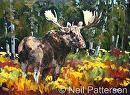 Bull Moose by Neil Patterson Oil ~ 18 x 24