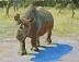 Rhino by Judith Owen