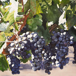 Kathleen Alexander - Calistoga: Painting Grapes in the Wine Country