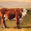 Cow Beauty