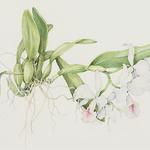 Mary Jane Zander - The Painted Garden Art Show