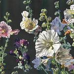 Antonio Darden - New Mexico Watercolor Society