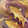 Brown Trout 10