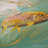 Brown Trout by Nora Larimer Oil ~ 8 x 10