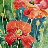 100/100 #32 - Poppies by Nora Larimer Watercolor ~ 10 x 8