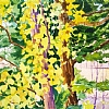 100/100 #13- Aspen Closeup by Nora Larimer Watercolor ~ 6 x 7